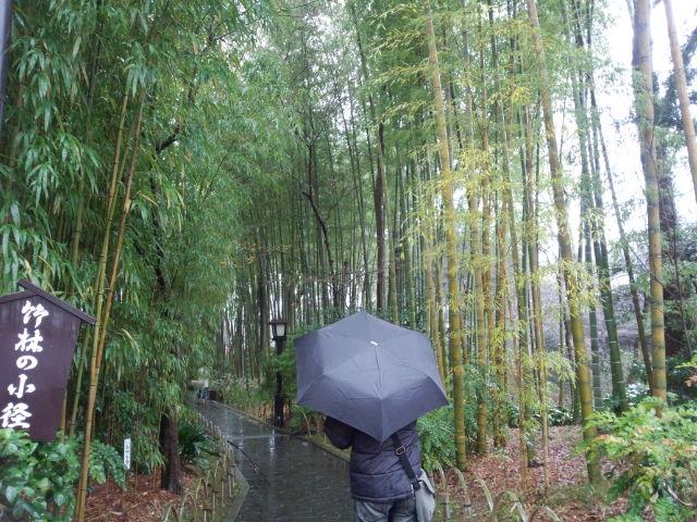 修善寺の竹林。