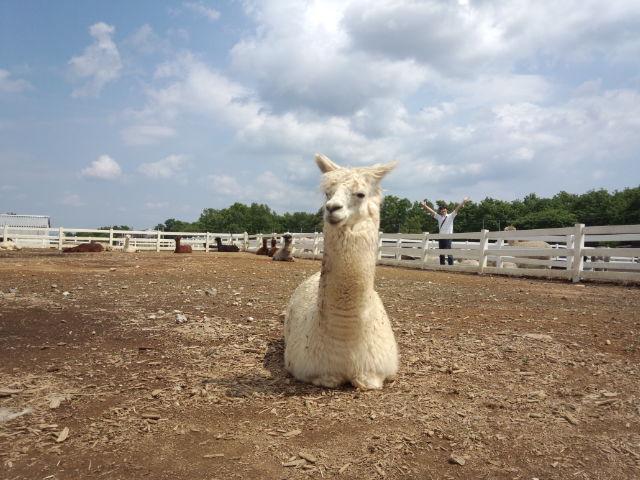 那須アルパカ牧場。
