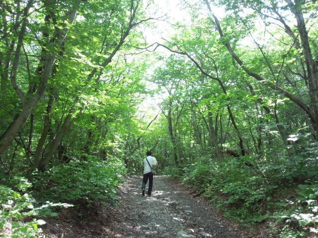 那須平成の森。